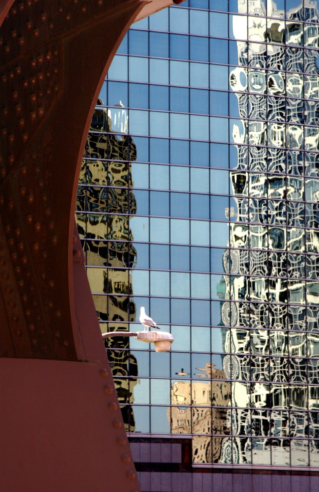 Bridge part, pigeon fixture, reflections in glass, Chicago abstract