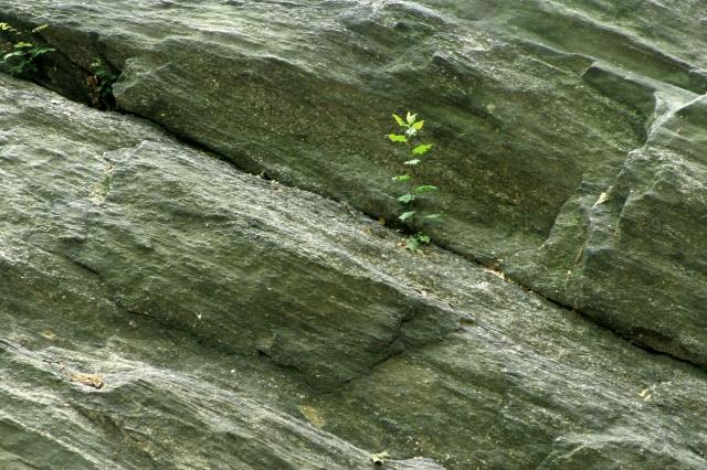 A plant grows in Manhattan