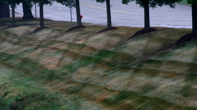 Dry cut at Carlson Towers parkway 002