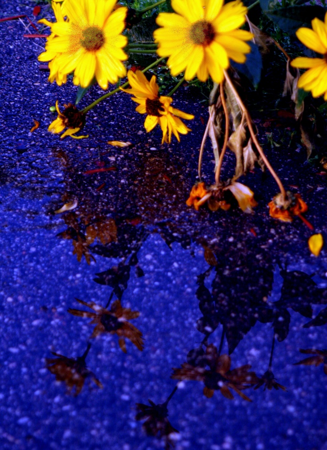 Asphalt blue