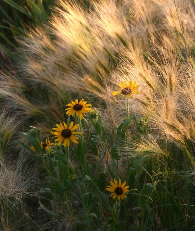 Bloom Prairie