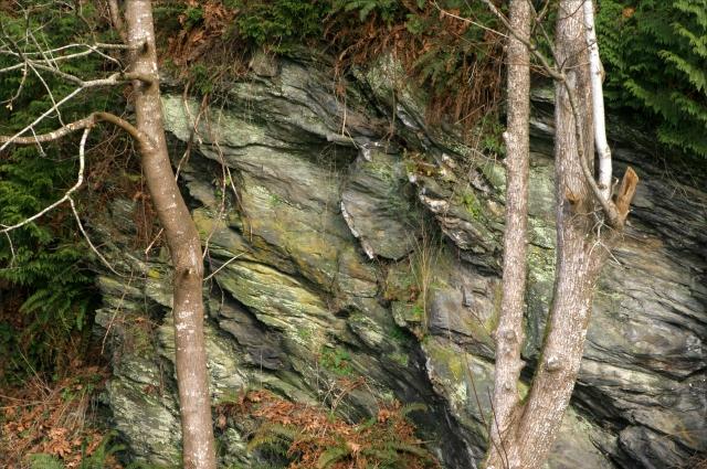 Cliff wall along Samish Bay 003, WA state