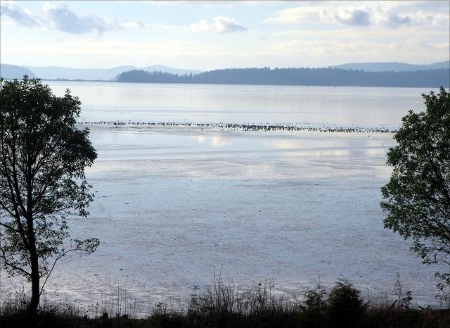 Samish Bay scenic Washington's Pacific Coast 003