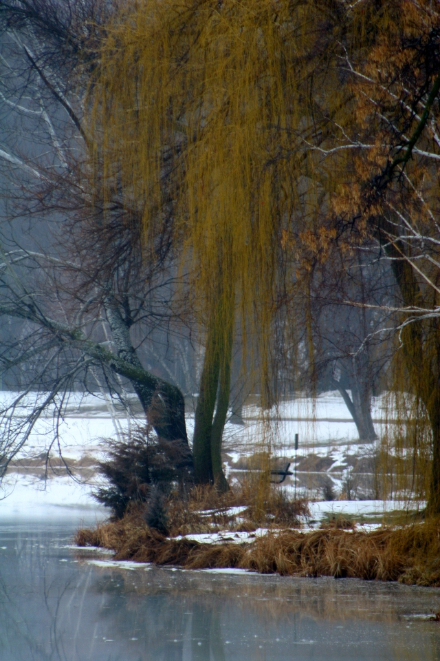 Willows and melted ice on pond 003