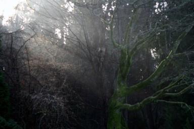 Foggy morning scenic Stanley Island 002