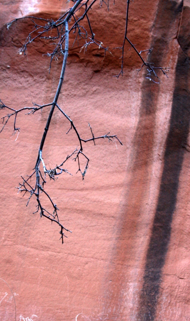 Branch and streaked rock