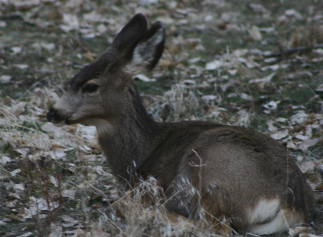 Deer grounded