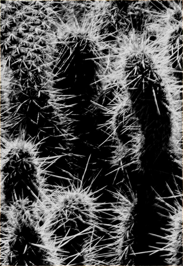 High contrast Cacti