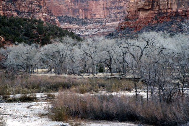 River valley scenic, Zion Canyon NPk