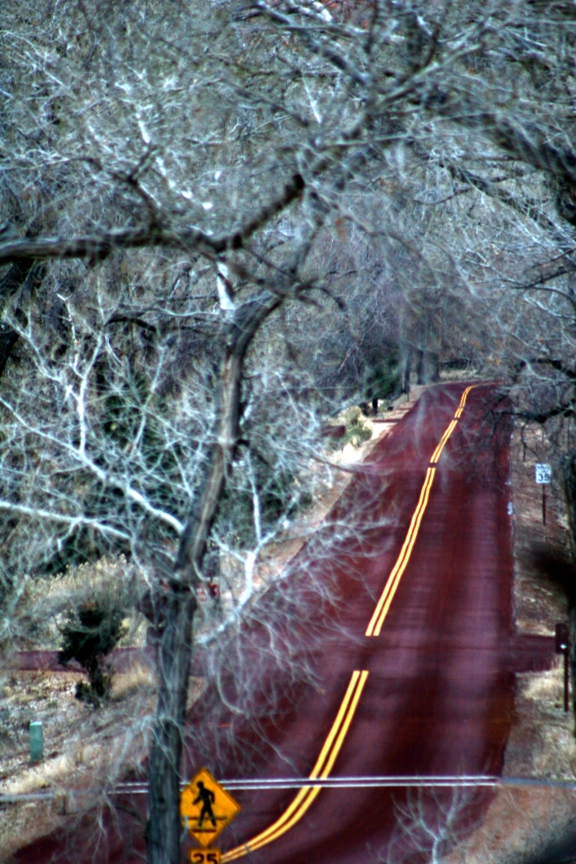 Road through light blue trees, Zion NPk