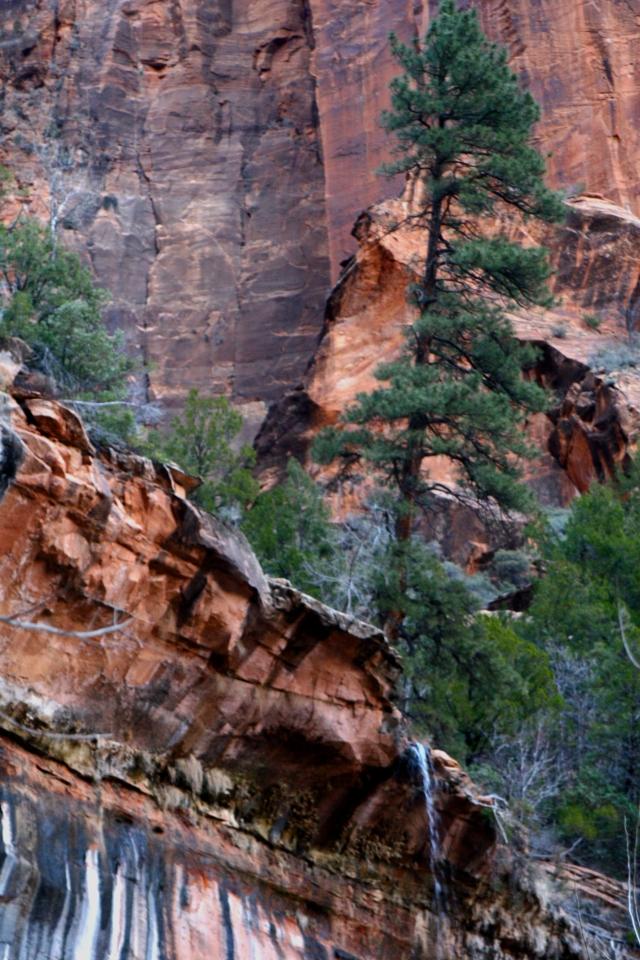 Scenic leak, waterfall near Emerald Pools 002, Zion Canyon NPk