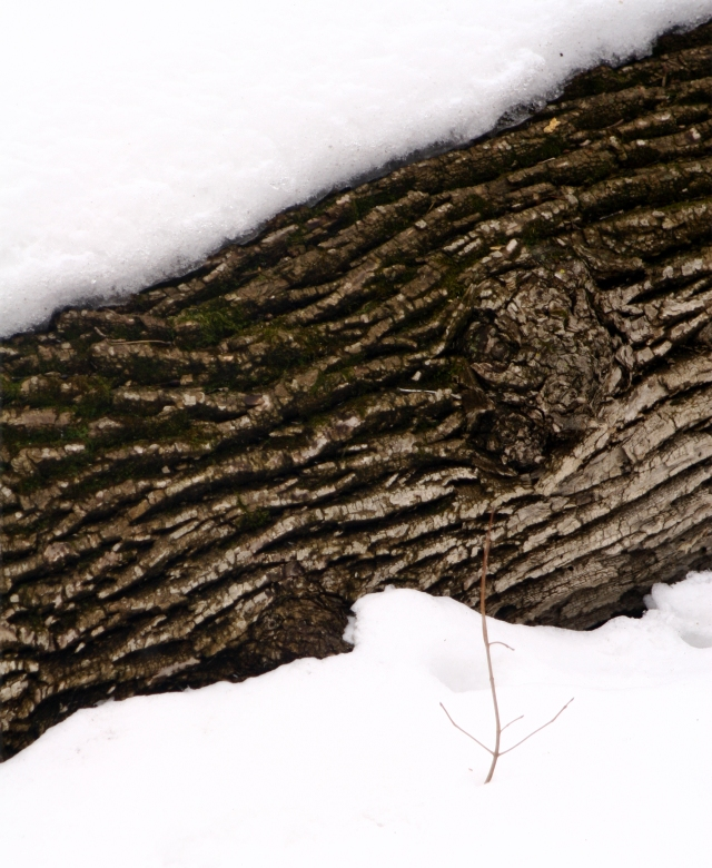 Bark blanket, Wood Rill SNA