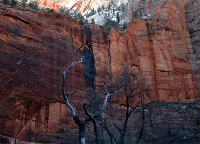 Hot rocks and cool branches Zion Natl Park 002