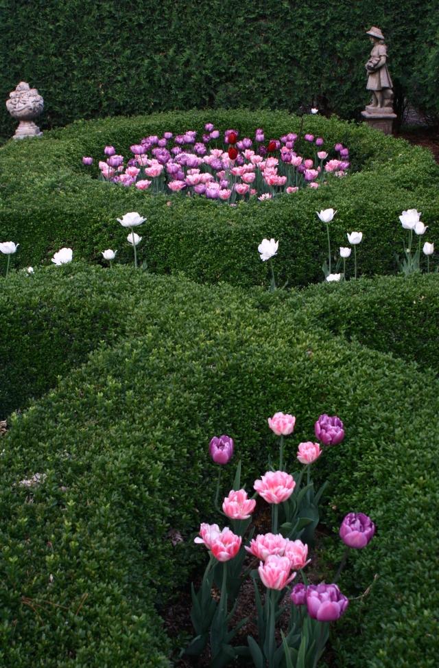 Ornate Tulips UW-Madison garden