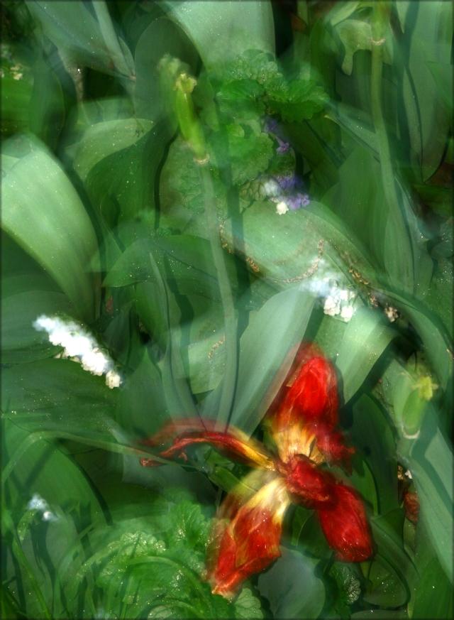 Spring flowers blur, Moms garden