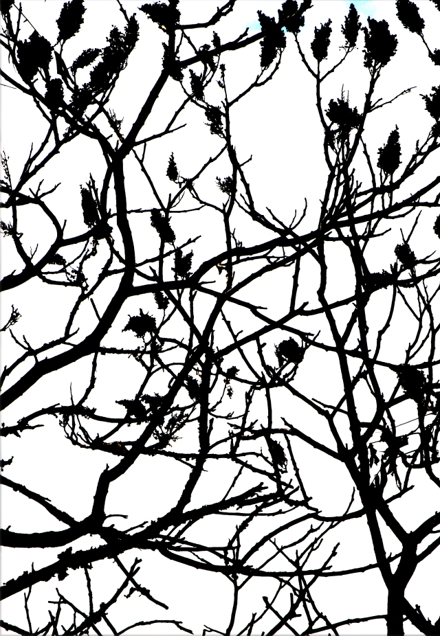Sumac sillhouette high contrast version