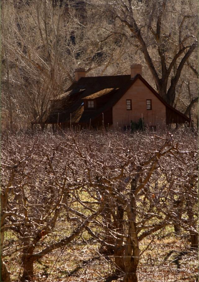 Vineyard near Zion National Park 002
