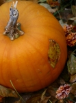 Pumpkin plastered with leaf
