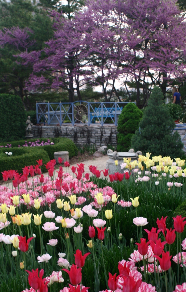 Allen Centennial Garden in full bloom at dusk