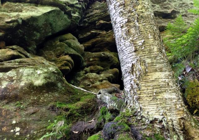 Parfrey's Glen textures,