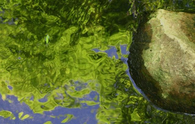 Stone cold reflection, Parfrey's Glen 002