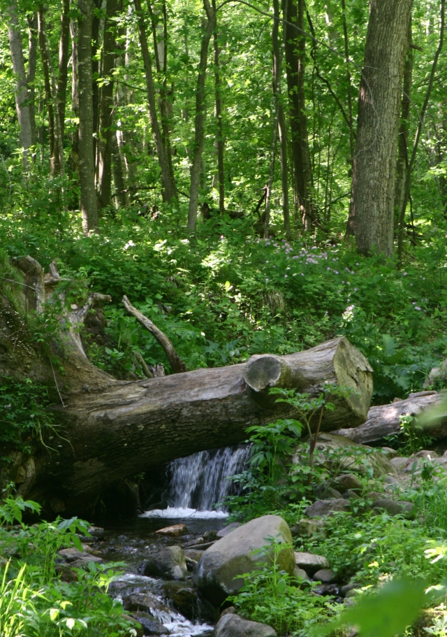 Trunk cated waterfall, Parfrey's Glen