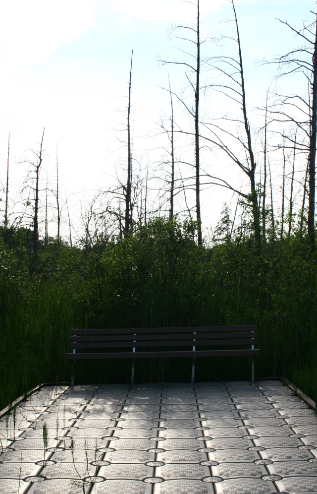 Bench on the edge of the tamarack bog, Carver Park Reserve