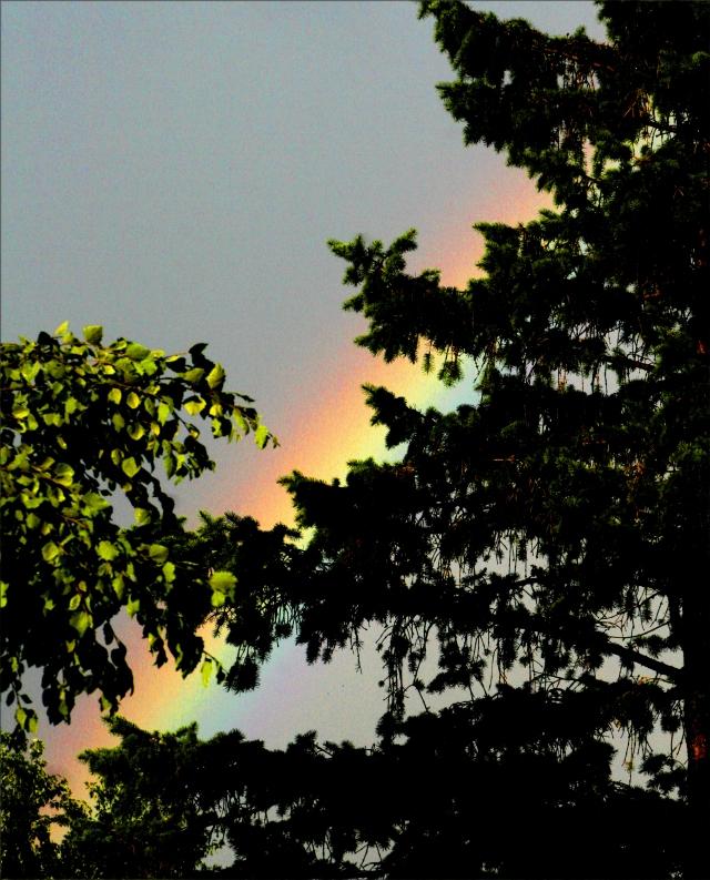 An evergreen rainbow