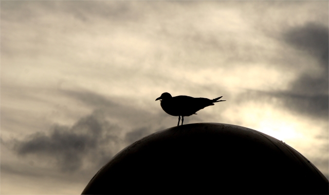 Gull dome, Miami Beach