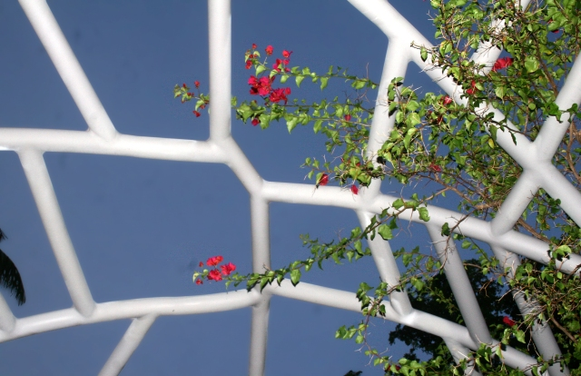 One big trellis, Miami Beach