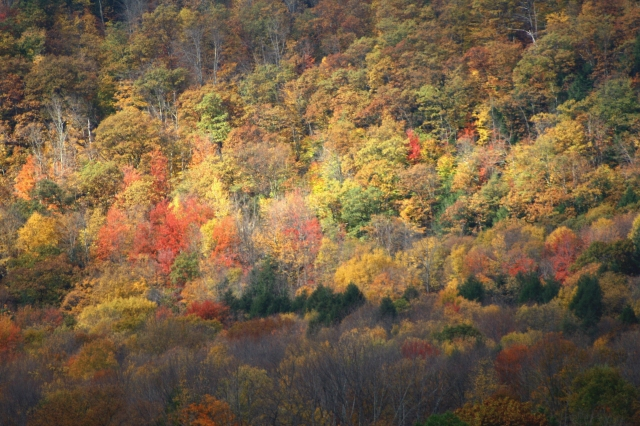 Berkshire fall color 002