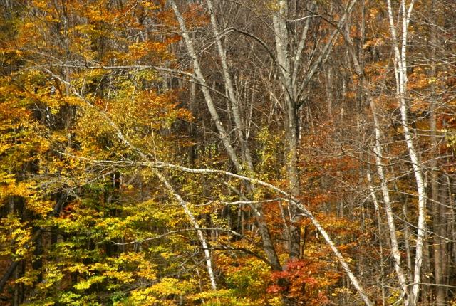 Berkshire fall color 010
