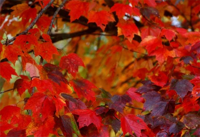Crimson all over, Kent Falls SPk