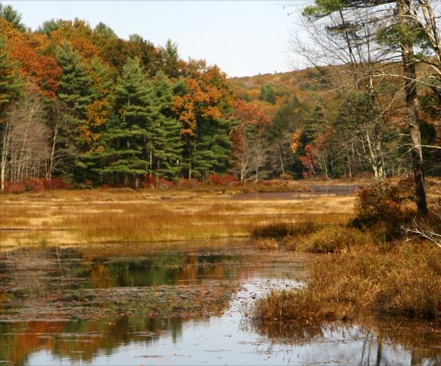 Fall classic landscape, Central MA 002