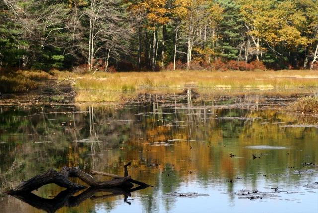 Fall classic landscape, Central MA