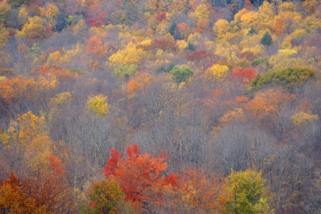 Fall daubs of color, Berkshires