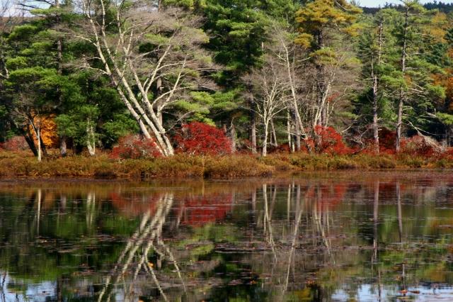 Fall reflection, Central MA