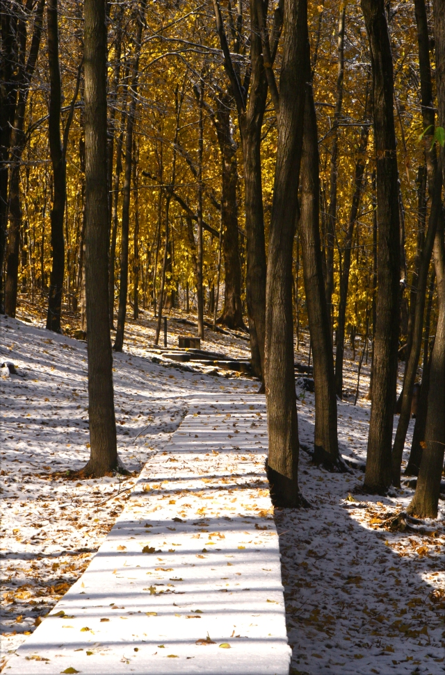 A winter walkway into a Fall Forest, Plymouth Creek