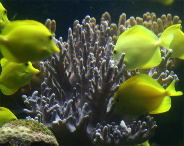 Feeding time at the OK Coral, Natl Aquarium