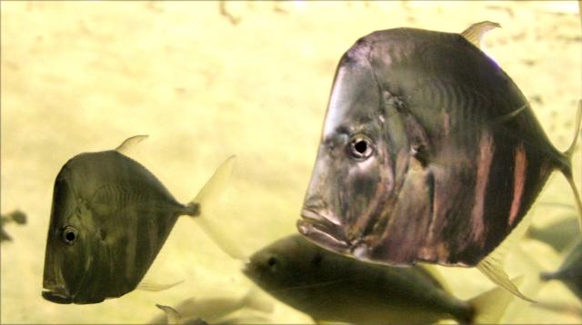 Grim and Grimmer, National Aquarium