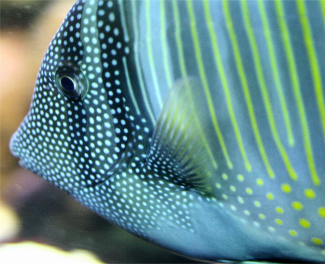Spotted and striped fish close up, Natl Aquarium