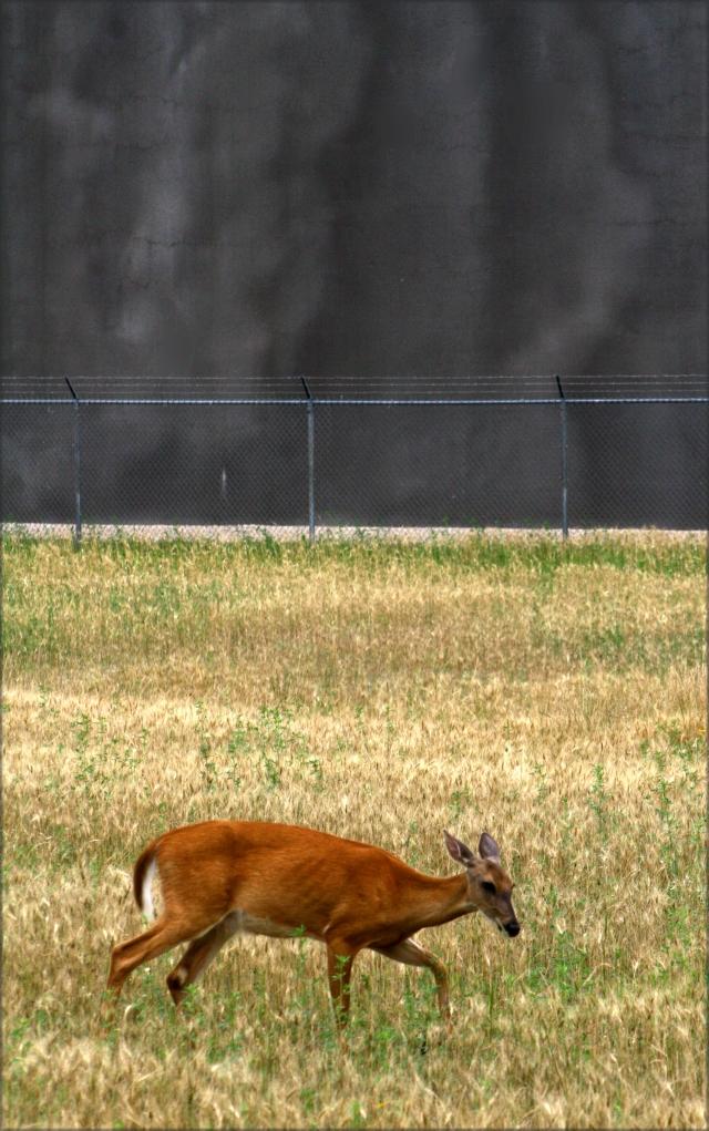 Deer and the water tank of doom