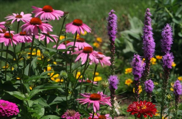 My garden in full summer bloom