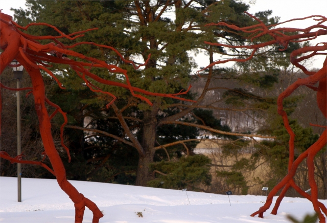 Red Sclupture and Evergreens, MN Arboretum