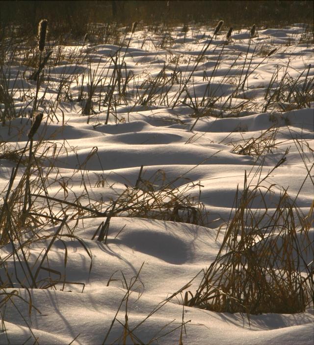 Snow lumps, MN Arborteum