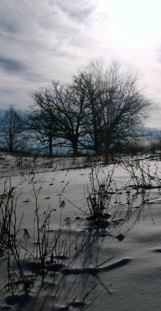 Snow on the open prairie, MN Arborteum