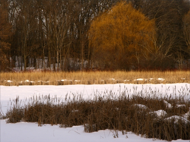 Winter scene 003, MN Arboretum