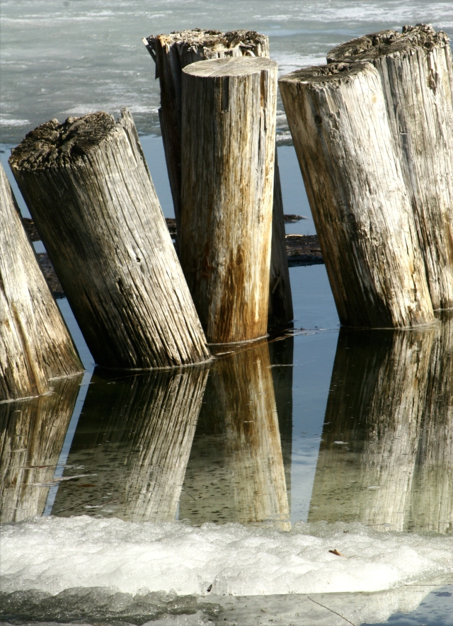 Wood pilings and a icy reflection, French Lake Regional Park