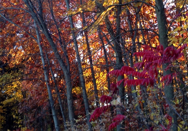 Variety of colors in Parkers Lake woods