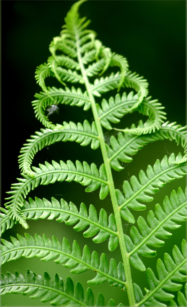 A Fern Fade out